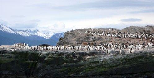 pinguis